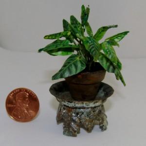 Planter short (8)